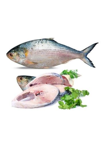 Hilsa fish to lose weight